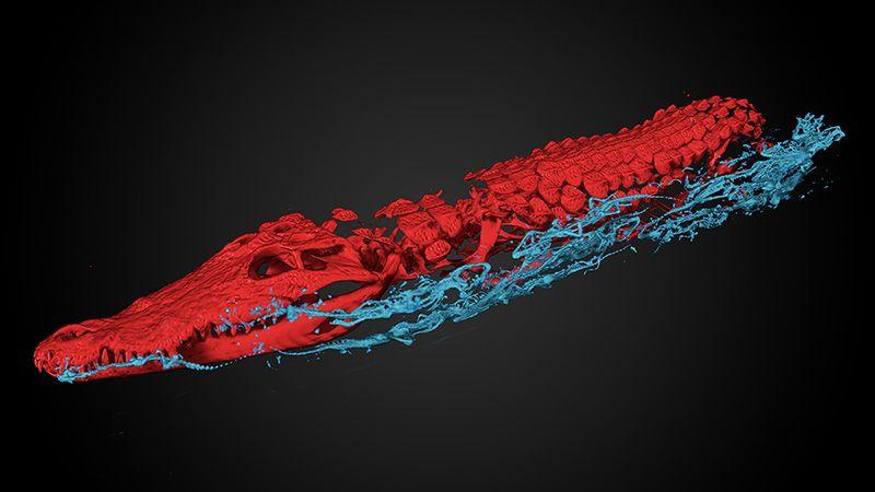 Scan krokodillenmummie