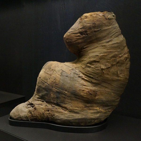 Mummie baviaan